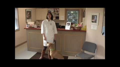 Career Connections-Veterinarian